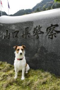 山口県の嘱託警察犬・メッシ 給料は褒め言葉