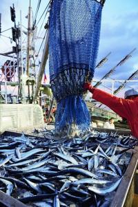 サンマ漁 漁場がロシア水域に離れてしまい思わぬ余波