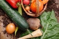 種苗業界に追い風、サカタのタネが過去最高益