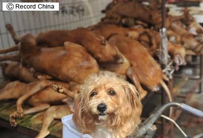犬肉祭り」に非難殺到も現地政府...