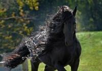 世界で一番のハンサム馬?投稿動画がネットユーザーの心をわしづかみ!―英紙