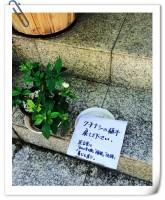 20日、自分の物が泥棒に遭ったら強い怒りを覚えるのが一般的な反応だが、在日中国人作家の黄文葦氏はたまたま通りかかった家の前で見かけた泥棒へのメッセージに日本人の優しさを感じ感動したと語っている。(Record China)