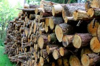 """""""日本産""""との理由で…韓国太白山のカラマツ50万本が伐採の危機に=韓国ネット「桜の木も抜くの?」「昔の日本と同じことをしている」"""