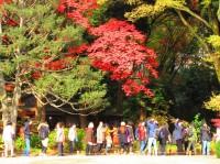 印象深い日本のドラッグストア、日常のささいな点に現れる日本人の素養―在日中国人