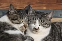 日本は世界で最もネコ好きな国?=「日本で暮らすネコたちは幸せ」「この点だけは日本民族に賛同する」―中国ネット