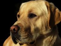 転落直前に盲導犬のハーネス放していた…、亡くなった日本人男性に中国ネット感動