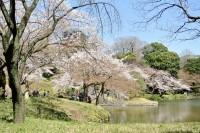 桜シーズンに日本を訪れる中国人観光客は減る?「放射能が心配」の声多数―中国メディア
