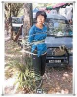 中国人女詐欺師、地元住民らに木に縛り付けられる―マレーシア