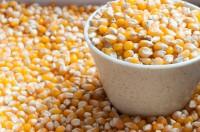 日本は中国からトウモロコシを輸入しなくなる?中国ネット「新しいものを日本に輸出し、在庫のものを中国人に売っていたな」