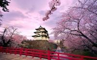 3連休がやって来る!海外旅行は桜シーズンの日本が大人気―中国