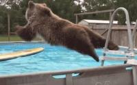 【動画】プールに飛び込むのが気持ちよくて夢中になったクマさん