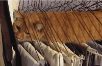 【動画】なぜ入ろうと思った?猫が見つけた意外なくつろぎスペース