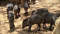 エサ不足で動物が相次いで餓死、経済危機のベネズエラ