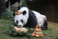 中国福建省の世界最高齢パンダが37歳に、人間の140歳に相当