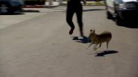 米ラスベガスに突如現れた「珍生物」、警察出動する騒ぎに