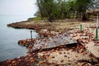 産卵期迎えたカニの大群、キューバのピッグス湾を「侵攻」