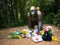 米動物園、ゴリラ射殺問題で園長が決定を擁護