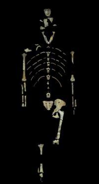 人類の祖先とされる「ルーシー」、死因は木からの転落か=研究