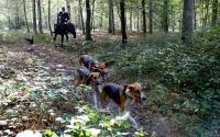 猟犬使ったシカ狩り、フランスの富裕層に人気高まる