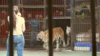 エジプトの女性猛獣トレーナー、危険は承知でも恐れず