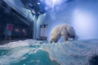 中国の「世界一かわいそうなシロクマ」、動物団体が新たな映像
