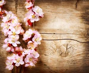 桜シーズンの日本、ぼったくり免税店に注意せよ? 中国ネット民「騙すのも騙されるのも中国人」=中国版ツイッター