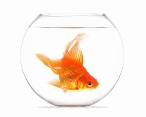 凄すぎる・・・「金魚」で全ての人を錯覚に陥れる、日本の奇才アーティスト=中国メディア
