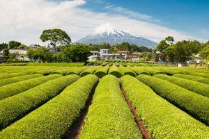 日本の一般的な農村と、中国一金持ちの農村を比べてみた 住みたいのはどっち? =中国メディア
