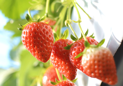 いちごは美容成分たっぷり! 甘いいちごの見分け方と、甘くないいちごを「甘く」食べる方法とは