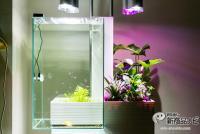 メンテ楽々!水槽&観葉がセットで楽しめる家庭用アクアポニックス『brio35(ブリオ)』を徹底検証!