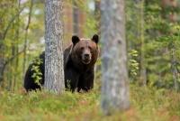 動物園のクマ担当者が語る「近頃のヒグマは人を恐れず襲ってくる」