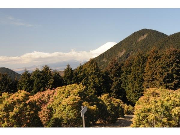 小田急沿線をのんびり歩いてみない!?参加費無料・特典満載のイベント開催