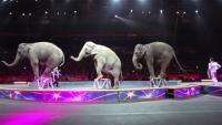 米サーカスがゾウの曲芸取りやめ、動物虐待と批判