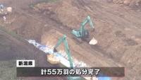 鳥インフルエンザ、新潟で55万羽の殺処分完了