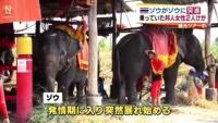 タイ・アユタヤでゾウ転倒、乗っていた日本人2人けが