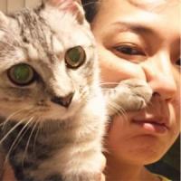 """板谷由夏""""猫パンチ""""で顔ゆがむ まさかの癒しショットに「その顔は出しちゃダメ」"""
