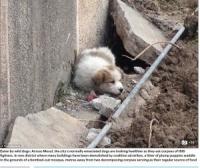 IS戦闘員の遺体は犬やニワトリのエサに イラク・モスル東部で