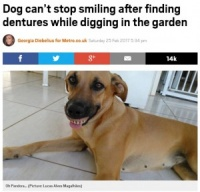 """裏庭から""""お宝""""を見つけた犬 総入れ歯でニッコリ(ブラジル)"""