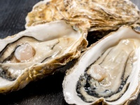世界初「あたらない」牡蠣も!? おいしく安全に「牡蠣」を食べる方法、教えます!