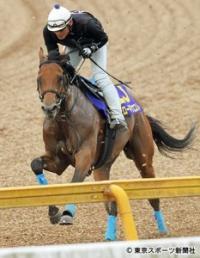 【日本ダービー】ロードクエスト 力強いフットワーク「離れた後方からしまいを生かす競馬で」