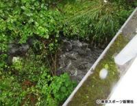 【長野小1女児遺体】宝物の人形救出のため川へ転落か
