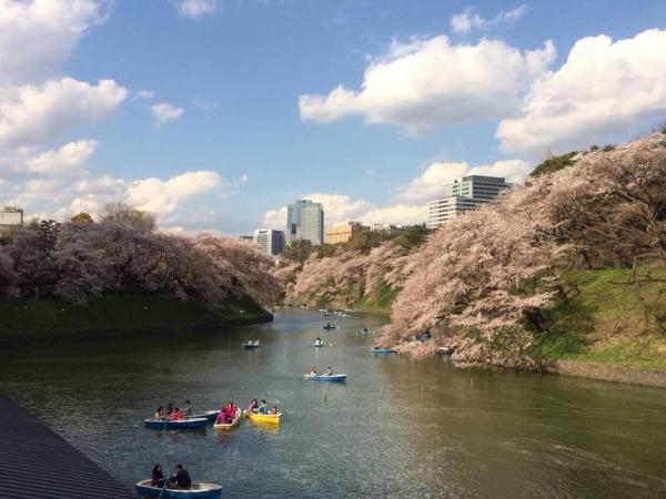 桜の季節、韓国で日本旅行の予約ラッシュ!韓国ネット「なぜあえて日本へ?」「あれだけ反日を叫びながら…」