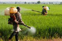 JA全農が2020年までに開発強化する「ジェネリック農薬」 普及を妨げるものは