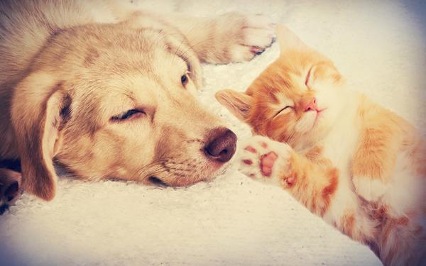 ぐっすり寝ている犬と猫の赤ちゃん