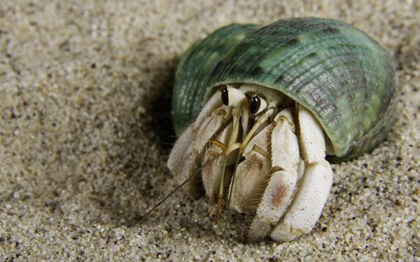 砂の上のヤドカリ