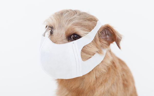 マスクをする犬