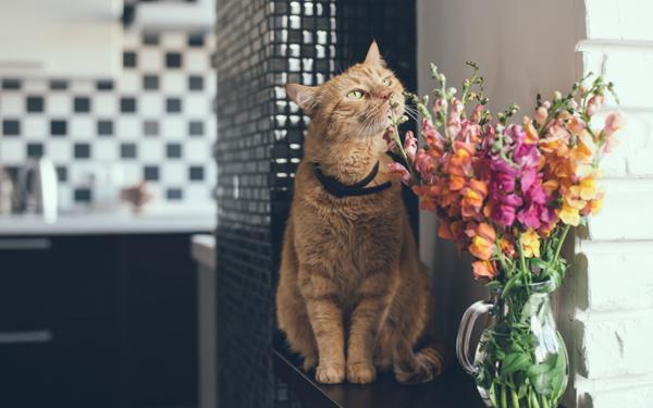 花の匂いをかぐ猫