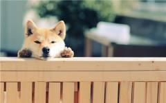 家庭に犬を迎える場合に考えておきたいこと