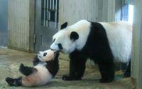 """東スポも朝日も震えた、""""巨大すぎるパンダ""""報道"""