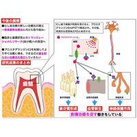 歯の神経の創傷治癒を促すメカニズムを解明-できるだけ削らない治療へ